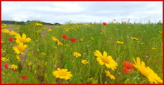 wild flowers in july (museque) Tags:
