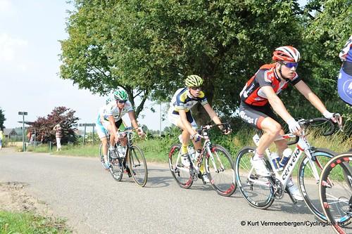 Geel Oosterlo  (120)