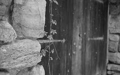 More Doors (Indofunk Satish) Tags: door stone blackwhite rocks trix vine canonet