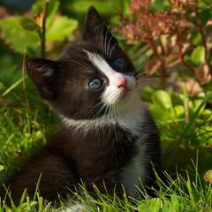 im365532 (bsvingen) Tags: flowers cats grass cat kitten kittens afsnikkor70200mmf28gedvrii