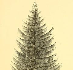 Anglų lietuvių žodynas. Žodis evergreen thorn reiškia amžinai žaliuodis lietuviškai.