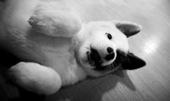 DSC_0913 (Manuel D Snchez) Tags: dogs perros dogos seleccionar