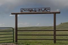 Closed range (Rocky Pix) Tags: ranch mountain rockies pix cattle rocky f16 wyoming nikkor pastoral range monopod 62mm rockypix normalzoom 1200thsec wmichelkiteley 2470mmf28f28g northforkofthelittlemedicinebowcreek closedrange