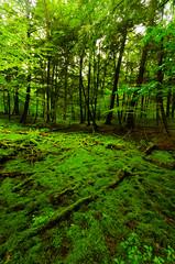 Forest (wackybadger) Tags: county tree ex price wisconsin forest dc nikon memorial grove sigma f4 sna hemlocks vilas hsm pricecounty wisconsinstatenaturalarea d7000
