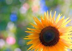 Summer flowers 12 (Margo, just Margo ...) Tags: herowinner