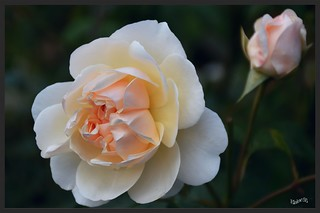Quinta flora..  Happy Birthday Charlotte xxx