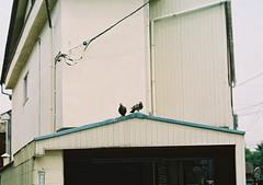 (sabamiso) Tags: bird tokyo   leicam4 elmarit90mmf28 efinitiuxisuper200