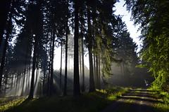 _DSC4043 Sonnenaufgang im Märchenwald - Sunrise in the fairy forest (baerli08ww) Tags: light summer sun mist tree green colors fog forest sunrise germany landscape deutschland licht nikon nebel sommer ngc natur npc shade grün landschaft sonne wald sonnenaufgang schatten baum farben morningsun rheinlandpfalz morgensonne waldweg westerwald rhinelandpalatinate foresttrail westerforest