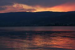Schwan ( Höckerschwan - Swan ) im Sonnenuntergang - Sunset am Bielersee bei Lüscherz im Berner Seeland im Kanton Bern in der Schweiz (chrchr_75) Tags: chriguhurnibluemailch christoph hurni schweiz suisse switzerland svizzera suissa swiss kantonbern chrchr chrchr75 chrigu chriguhurni 1409 september 2014 hurni140905 bielersee see lac lace lago berner seeland albumbielersee september2014 albumschwan schäne schwan höckerschwan höckerschwäne cygnus olor vogel wasservogel entenvogel schwäne swan joutsen cygne svanur cigno スワン zwaan cisne sveitsi sviss lake sonnenuntergang sunset coucher du soleil zonsondergang tramonto 夕日 albumzzzz140905gummiboottourkallnachbielersee