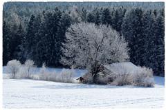 Dicembre ... ❤ (Augusta Onida) Tags: augustaonida valleaurina adige italia italy neve snow bianco white albero tree casa house foresta forest altoadige
