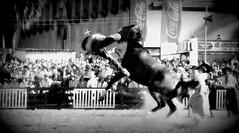 El reservado (Eduardo Amorim) Tags: horses horse southamerica criollo caballo uruguay cheval caballos cavalos prado montevideo pferde cavalli cavallo gauchos pferd chevaux gaucho  amricadosul montevidu uruguai gacho amriquedusud  gachos  suramrica amricadelsur sdamerika crioulo caballoscriollos criollos jineteada  americadelsud gineteada crioulos cavalocrioulo americameridionale caballocriollo campeiros campeiro eduardoamorim cavaloscrioulos pasomolinosudamrica