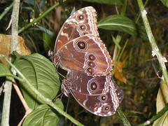 2008-10-18 Tropical Wings _63 (Velda Tiger Lily Varney) Tags: camera pentax compact cameraequipment pentaxoptiol30 brandmain