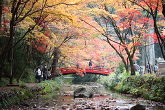 I miss Japan. Hope to be back soon! (mamieberry) Tags: canoneoskissx2