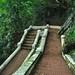 Descending Mt Phousi stairs, Luang Prabang, Laos