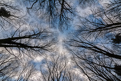 Looking up. (Callaghan69) Tags: uk trees sky abstract tree nature clouds woodland landscape countryside perspective lookingup northumberland northeastengland d7100 tokina1116 nikond7100