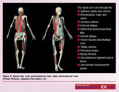 42DY18_1 (sportEX journals) Tags: stretching rehabilitation fascia massagetherapy sportex sportsinjury sportsmassage sportstherapy sportexdynamics
