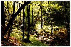 wood (gurou45) Tags: wood autumn light summer sun nature water trekking river germany landscape licht wasser europa europe time outdoor sommer natur bach grün fluss landschaft sonne wald zeit canoneos50d