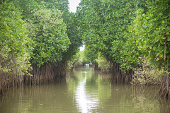 Entering the Forest (Gautham Metalingus) Tags: trees lake forest canon landscape boat fishermen crab system mangrove kingfisher root mangroves forests tamilnadu boatride intricate canon18135mm canon550d