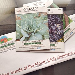 "I love when my Seeds of the Month Club envelope arrived in the mail. I plan on attempting to grow a few collards this fall along with another round of radishes, kale, lettuce, and beets.  Are you planting any fall crops in your garden? • <a style=""font-size:0.8em;"" href=""https://www.flickr.com/photos/54958436@N05/15224484771/"" target=""_blank"">View on Flickr</a>"