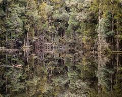 Lush (gomezthecosmonaut) Tags: newzealand reflection largeformat nativeforest toyoview45g rhinocam waihoralagoon sonynex7 schneiderkreuznachsupersymmarhm120mmf56