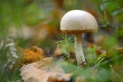 The Colors of the Autumn (kva_pharm) Tags: autumn mushroom colors season mashroom fungus