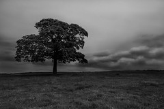24/52 Less is More (under_exp0sed) Tags: trees blackandwhite bw monochrome clouds canon project landscape mono 1022mm week24 60d project52 522015 24522015