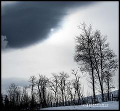 _BW74918-Winter Sky (Bruce Walter) Tags: trees winterscene winter beautifulbc explorebc getoutside merrittbc merritt