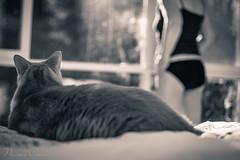 naomi170404-104 (Naomi Creek) Tags: self portrait morning light girl underwear bedroom window legs bed sunlight 52picturesofme black white bw cat watch