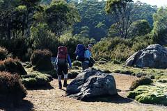 20170302-10-Leaving camp (Roger T Wong) Tags: australia greatpinetier np nationalpark sel70300g sony70300 sonya7ii sonyalpha7ii sonyfe70300mmf2556goss sonyilce7m2 tasmania wha wallsofjerusalem worldheritagearea bushwalk camp hike morning trektramp walk