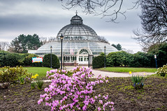 Palm House (Tony Shertila) Tags: 20170311105714 greenbankward england unitedkingdom europe britain merseyside liverpool outdoor sefton seftonpark palmhouse flowers structure glasshouse architecture gbr