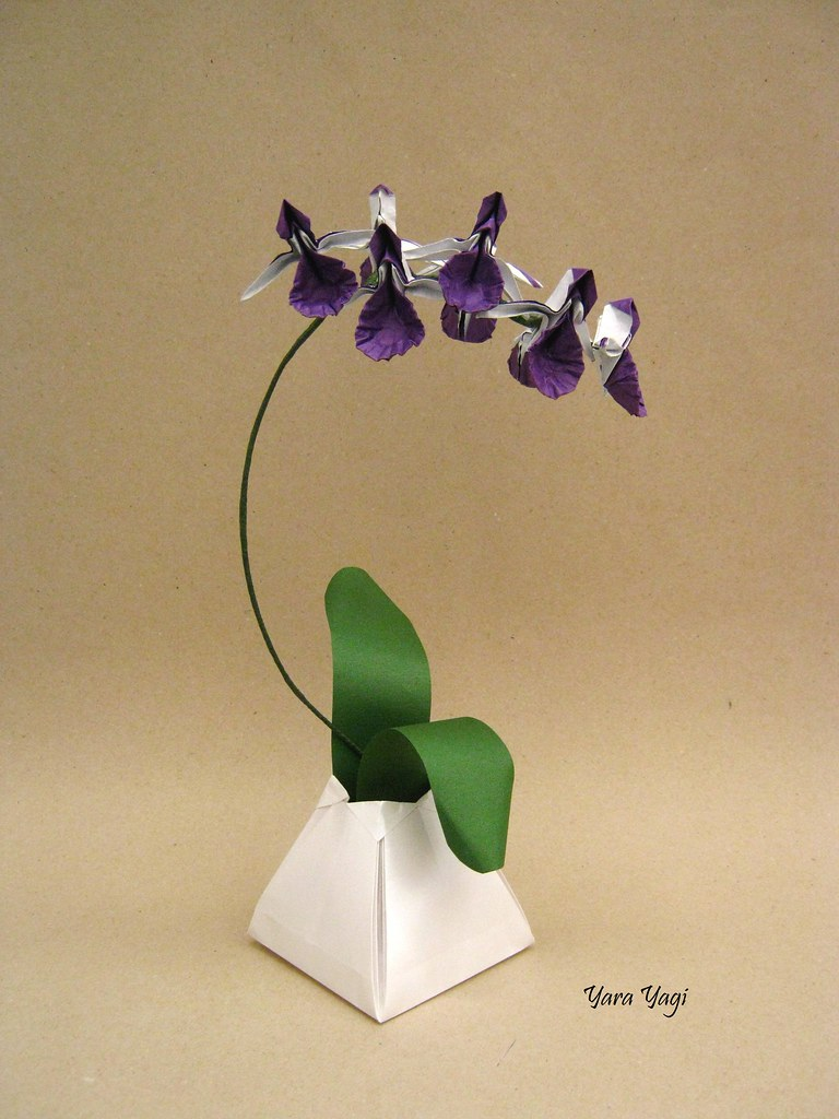 Orchid Research