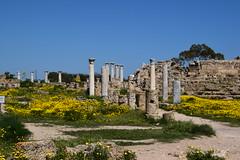 DSC_0245 (mark.greefhorst) Tags: cyprus northerncyprus salamis ancientworld roman