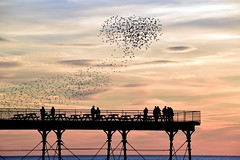 The look of love....sunset and a heart shaped murmuration (karen leah) Tags: heart love sunset murmuration starlings romance sky pier extraordinary magical unique spring original breathtaking perfection happiness nature greatphotographers
