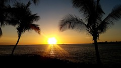 Week 12 - Silhouette (Eliza G.) Tags: sunset hawaii bigisland palmtrees orangesky