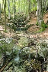 "Wanderung zur Kenzen-Hütte • <a style=""font-size:0.8em;"" href=""http://www.flickr.com/photos/89298352@N07/14144721559/"" target=""_blank"">View on Flickr</a>"