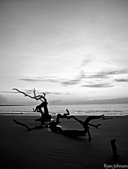 Driftwood Beach on Jekyll Island, GA (DancingTerrapin) Tags: ocean wood blackandwhite white black beach ga georgia coast sand sandy atlantic driftwood coastal jekyllisland atlanticocean jekyllislandga coastalgeorgia jekyllislandgeorgia driftwoodbeach