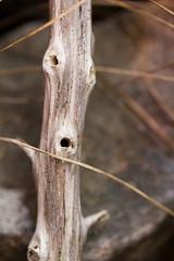 - (Matthias Kremer Photography) Tags: macro coast branch close dry driftwood stick knots barnch