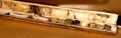 Ancistrocerus nigricornis pupae and parasitoid (Scrubmuncher) Tags: hymenoptera wasps solitarywasps predation neststocking nestbuilding entomology insects rosspiper ancistrocerus solitarywasp wasp predator ross piper