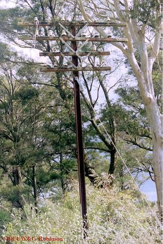 Telegraph pole, Penrose