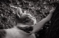 (Vavvaflo) Tags: light italy cats white black cat sardinia shadows kitty lovely gatti