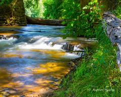 Along the Bank (augphoto) Tags: nature water river outdoors us unitedstates scenic southcarolina cascade enoree augphotoimagery