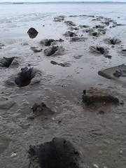 Hunter Streamfisher waders take an evening walk at the mudflats. (essex_mud_explorer) Tags: thames mud boots footprints rubber estuary hunter essex mudflats muddy waders gummistiefel thighboots thamesestuary bootprints stanfordlehope cuissardes hunterboots rubberwaders streamfisher estuarymud hunterwaders muckingflats
