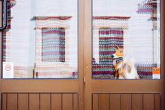 standingGuard (davidclifford) Tags: street door urban dog color reflection portugal window canon streetphotography surreal urbanscape alcobaca vsco canoneos5dmarkii vscofilm