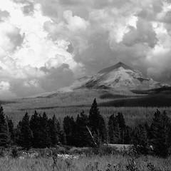 the rockies (eriynali) Tags: trees sky blackandwhite mountain beautiful clouds square landscape nationalpark view peak glacier alpine evergreens wildflowers goingtothesun
