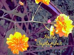 September (Rody09) Tags: life morning autumn flower yellow september monday