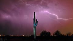 Saguaro strike (Crotalusfreak) Tags: life arizona cactus sky storm southwest nature night clouds landscape photography desert monsoon lightning southwestern apachejunction