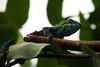 MMB_2673 (mmariomm) Tags: chameleon