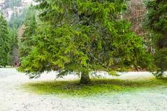 Arbre  l'abri du givre (D.Goodson) Tags: france didier arbre froid goodson bonfils