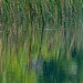 reeds... and reflections ~ Lake Huron