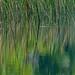 reeds... and reflections ~ Lake Huron
